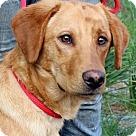Adopt A Pet :: Rufus~B