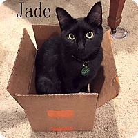 Adopt A Pet :: Jade - Wichita Falls, TX