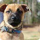 Adopt A Pet :: Norton
