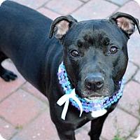 Adopt A Pet :: Maui - Elizabethtown, PA
