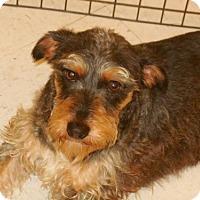 Adopt A Pet :: Poppy - Brunswick, ME