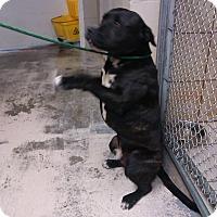 Adopt A Pet :: JR - Thomaston, GA
