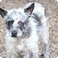 Adopt A Pet :: Laredo - MEET ME - Norwalk, CT