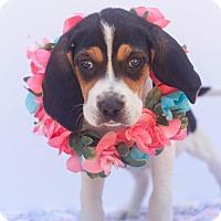 Adopt A Pet :: Penelope - Loomis, CA