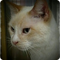 Adopt A Pet :: Fiona - Pueblo West, CO