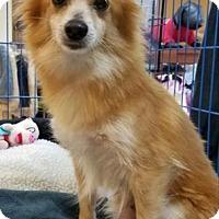 Adopt A Pet :: Evee - Miami, FL