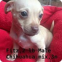 Adopt A Pet :: Fitz - North Brunswick, NJ
