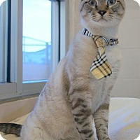 Adopt A Pet :: HOMER - LYNX POINT LOVER - Plano, TX