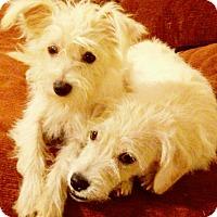 Adopt A Pet :: Fluffy/Tank - Fallbrook, CA