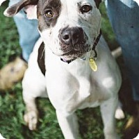 Adopt A Pet :: Piper- Ohio - Fulton, MO