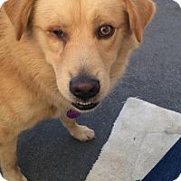 Adopt A Pet :: Leroy - Mission Viejo, CA
