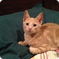 Adopt A Pet :: Squirt - Houston, TX