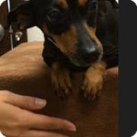 Adopt A Pet :: Kia - Weston, FL