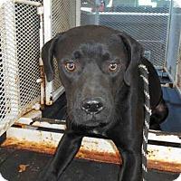 Adopt A Pet :: Florence - Newnan City, GA