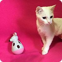 Adopt A Pet :: Deema - Bauxite, AR
