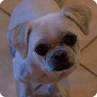 Adopt A Pet :: Dash - Cambridge, ON
