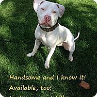 Adopt A Pet :: Wally - San Jose, CA