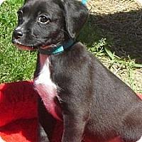 Adopt A Pet :: Waffle - Sugarland, TX