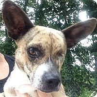 Adopt A Pet :: Betty - Ooltewah, TN