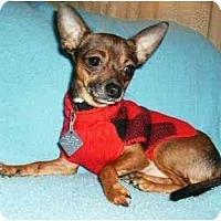 Adopt A Pet :: Elliott - Mooy, AL