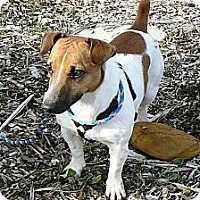 Adopt A Pet :: Jetson - Ridgely, MD