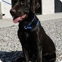 Adopt A Pet :: Destiny - Lewisville, IN