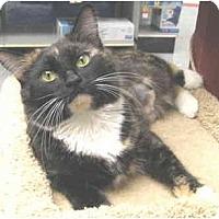 Adopt A Pet :: Lil Bits - Mesa, AZ