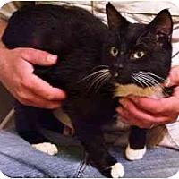 Adopt A Pet :: Bingo - Wakinsville, GA