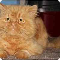 Adopt A Pet :: Tawny - Davis, CA