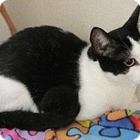 Adopt A Pet :: Sam - Conroe, TX