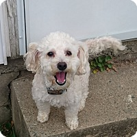 Adopt A Pet :: Dylan - Richmond, VA
