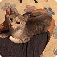 Adopt A Pet :: Amber - East Brunswick, NJ