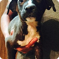 Adopt A Pet :: Cheney - Dumfries, VA