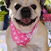 Adopt A Pet :: Dixie - Pueblo, CO