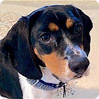 Adopt A Pet :: Wilson - Houston, TX
