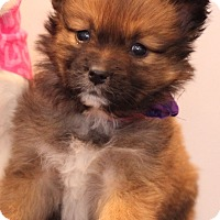 Adopt A Pet :: Aruba - Waldorf, MD