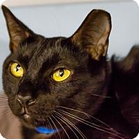 Adopt A Pet :: Pride - Oakland Park, FL