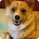 Adopt A Pet :: Priya