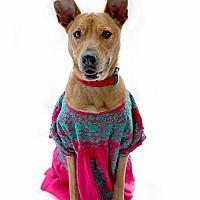 Adopt A Pet :: Daphne - Los Angeles, CA