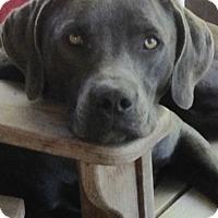 Adopt A Pet :: Leonard - Jasper, TN