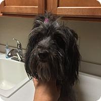 Adopt A Pet :: Kiara - Las Vegas, NV