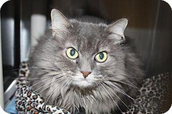Domestic Longhair Cat for adoption in Salem, Massachusetts - Mishka