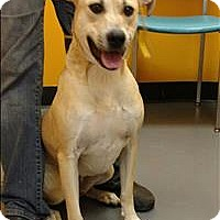 Adopt A Pet :: 16-10-2903 River - Dallas, GA