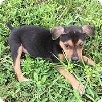 Adopt A Pet :: JJ - Pompano beach, FL