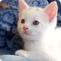Adopt A Pet :: Springfield - Huntsville, AL