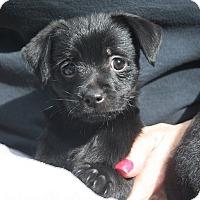 Adopt A Pet :: Mindy - Henderson, NV