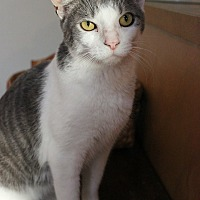 Adopt A Pet :: Checkers - Palmyra, NJ