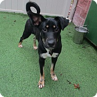 German Shepherd Dog Mix Dog for adoption in Cleveland, Ohio - Paisley