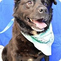 Adopt A Pet :: Blackie - Monroe, MI