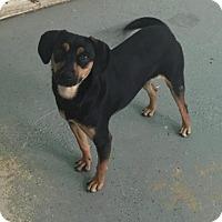 Adopt A Pet :: Rita - Phoenix, AZ